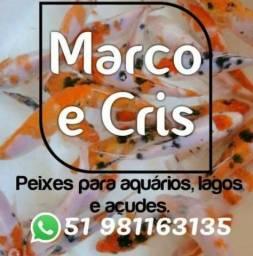 Lindas Carpas - Entregas Grátis para Caxias, Farroupilha , Gramado e Canela