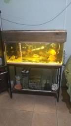 Aquário de 160 litros com sump
