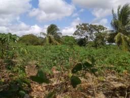 Excelente terreno para granja medindo 60 x 100