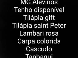 MG Alevinos