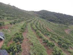 Terreno Plantação de café