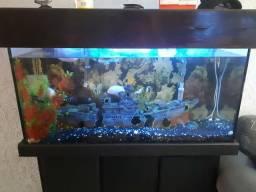 Vende-se aquário 250 litros