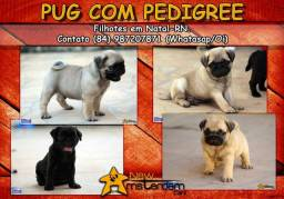 Pug abricot ou preto com pedigree e no padrão