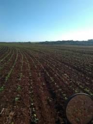Area terra para pecuaria e agricultura, Sto Ant das Missões