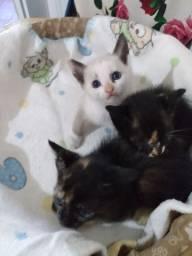 doação desses lindos felinos
