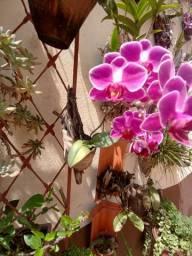 Arranjos rústicos de orquídeas, bromélias e outras.