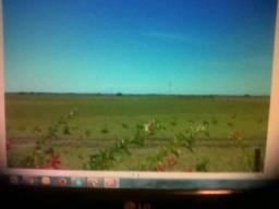 Fazenda a 33 Km de Porto Rico - Paraná