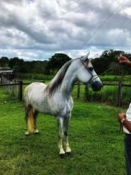 Cavalo MM picado ligeiro