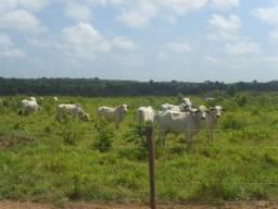 Fazenda no Pará,330 Alqueires pronta a 20 mil reais o alqueire 80% de pasto