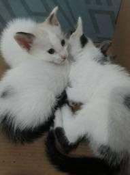 Doa-se lindos filhotinhos de gato e adulto