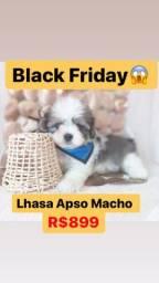 Lindíssimo Lhasa Apso macho! R$899
