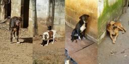 Ajude a manter esses cãezinhos
