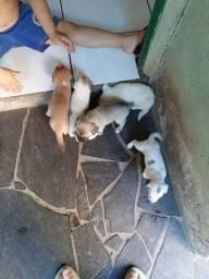 Doação de cachorrinhos....