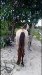 Título do anúncio: Cavalo pra lote