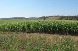 Área imperdível R$100.000,00 o alq. de planta/R$50.000,00 bosque e rio