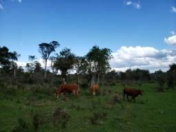 Belíssimo sitio localizado na cidade Rio Rufino