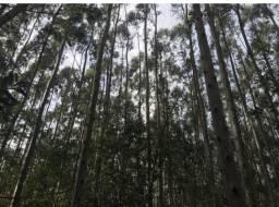 Plantamos Florestas Eucalipto Acacia e Pinus tb Fizemos Parceria