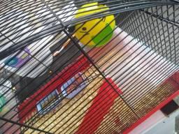 Vendo gaiola com um casal de hamster sírio