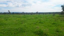 620 hectares, pecuária, próximo de Cuiabá em Livramento-MT