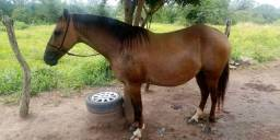 Égua picado + filhote potra