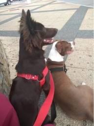 Coleira Anti Puxão Coleirarte Cachorro Porte Médio E Grande