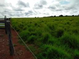Fazenda 1.771 há (366 alq) com aproveitamento em pecuária e grãos