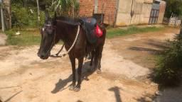 Égua top pra venda!!!