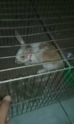 Coelho com gaiola