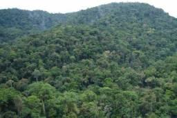 Vendo área Rural com 56.000 Hectares na Região do Amazonas!