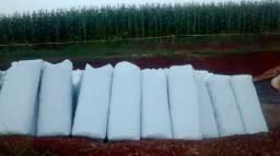 Silagem de milho ensacada de alta qualidade