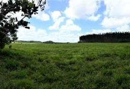 Fazenda de 980 Tarefas em Estância