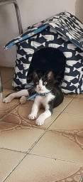 Lindos gatinhos bebês para adoção