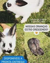 KIT Coelho de estimação + gaiola + comedouro + bebedouro + ração