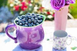 Blueberry ( Mirtilo ) Fruta