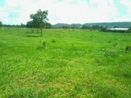 Fazenda pra gado   59 Alqueires   região Serranopolis