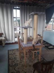 arranhadores  para seu gato.