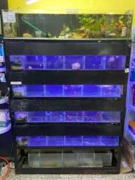 Bateria de aquário (6 aquarios) 1,50x2,50x0,31