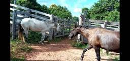 1 égua 1 potra e um potro