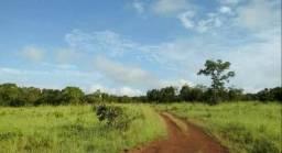 Fazenda 440 hectares - Livramento