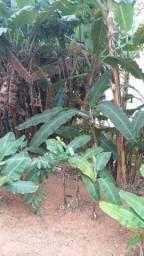 Bom Jardim-linhares