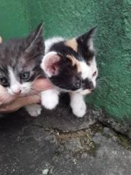 Adoção responsável de gato ?