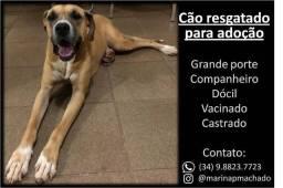 Cão resgatado para adoção.