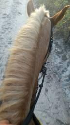 V-T cavalo de esteira