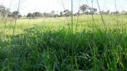 Fazenda para Pecuária com 333 hectares