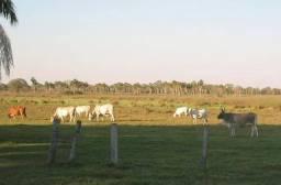 Pantanal Mato Grossense Fazenda com 62.700 mil Hectares