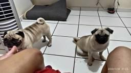 Babá de cães