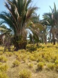 Sitio 20 hectares