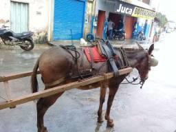 vendo esa carroça arriada com burro 3.000 reais