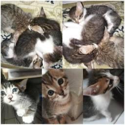 Filhotes de gatos para doação( flocados)
