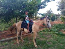 Vende-se ou troca-se Cavalo 1900, com sela e arreios